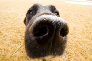 Community Post: 25 Animals Close-Up With A Wide-Angle Lens